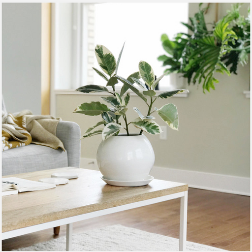 Curved Planter | Medium