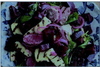Beetroot, Grilled Lamb & Haloumi salad