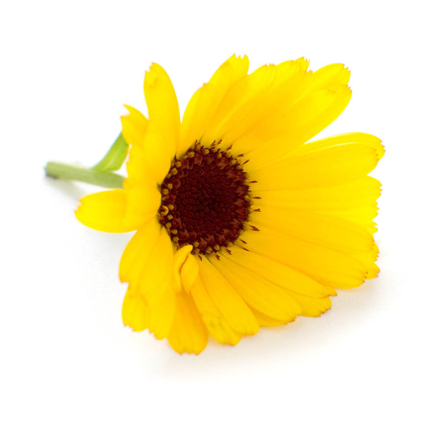 Calendula - Grow Your Own