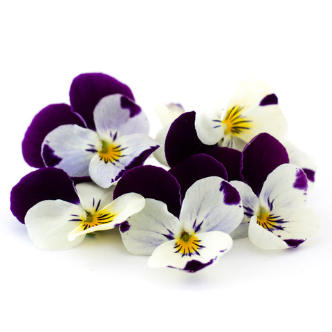 Viola Purple and White