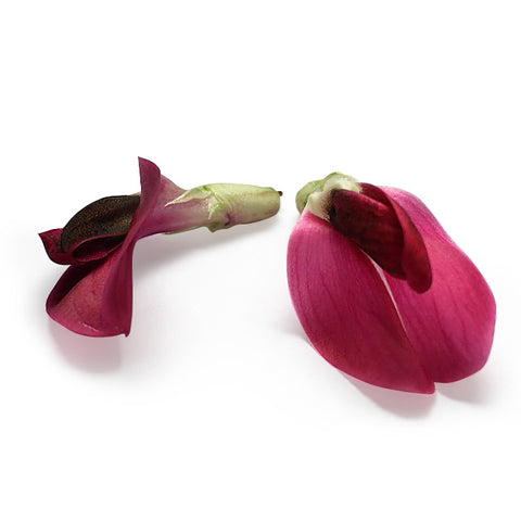 Broad Bean Flower Crimson
