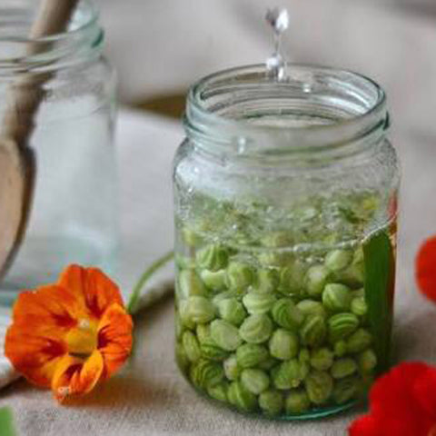 'Poor Mans Capers' Pickled Nasturtium Seed Pods