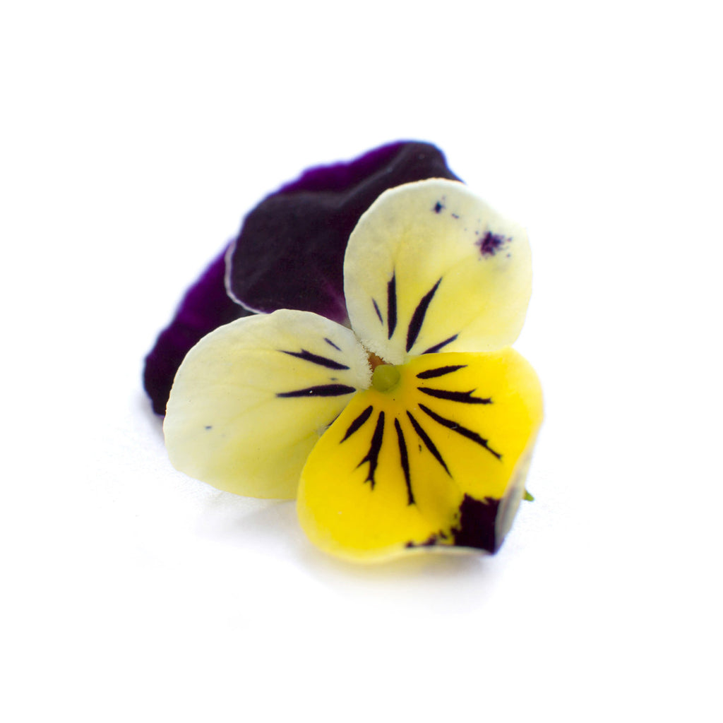 Viola 'Johnny Jump Up'
