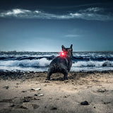Orbiloc | Orbiloc Dog Dual Safety Light - Hund von Eden