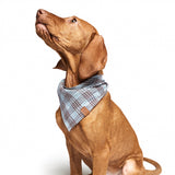 Cloud7 | Bandana Check Brown – Cyan - Hund von Eden