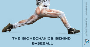 The Biomechanics Behind Baseball