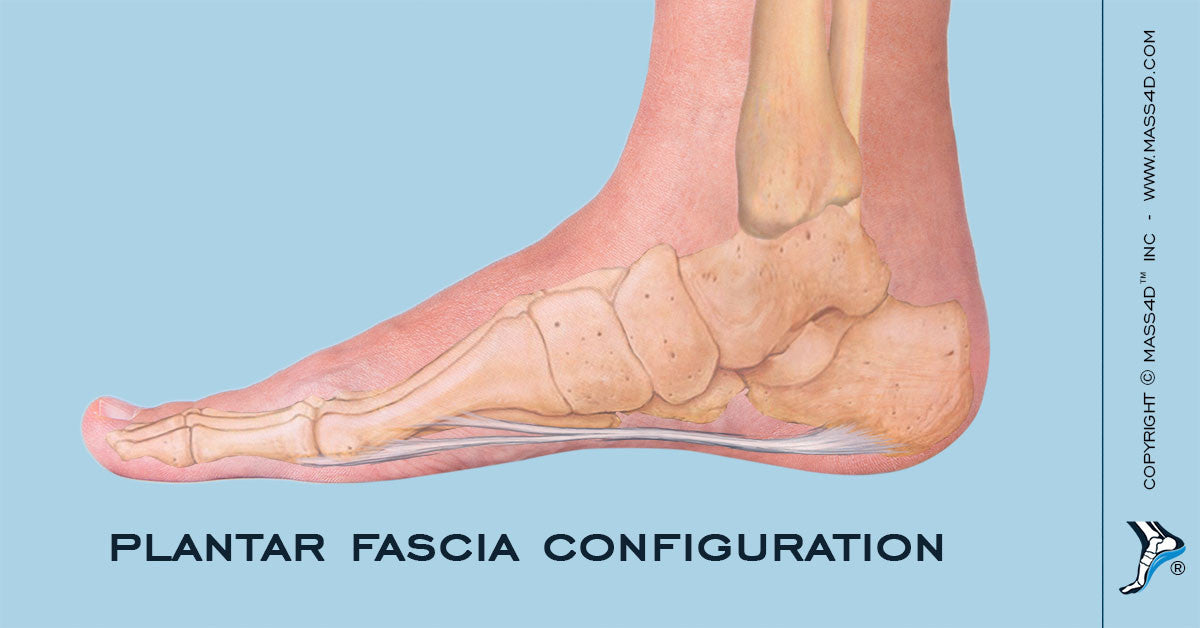 Plantar Fascia Configuration - MASS4D® Insoles and Foot Orthotics