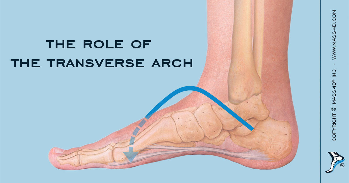Function of the Transverse Arch - MASS4D® Insoles and Foot Orthotics