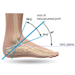 Degrees of Motion of the Foot