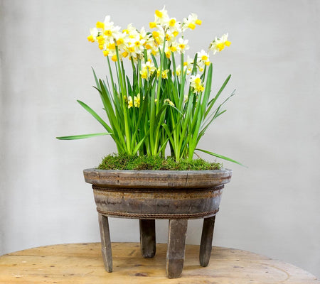 How to turn a decorative antique pot into a beautiful planter