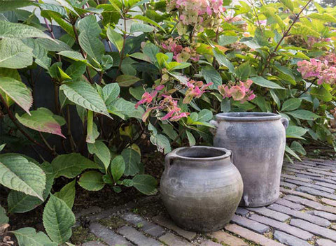 Pots beneath green leaves