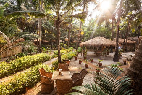 luxury Goa palm grove