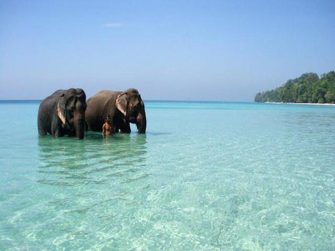 Snorkelling with elephants - radhanagar beach