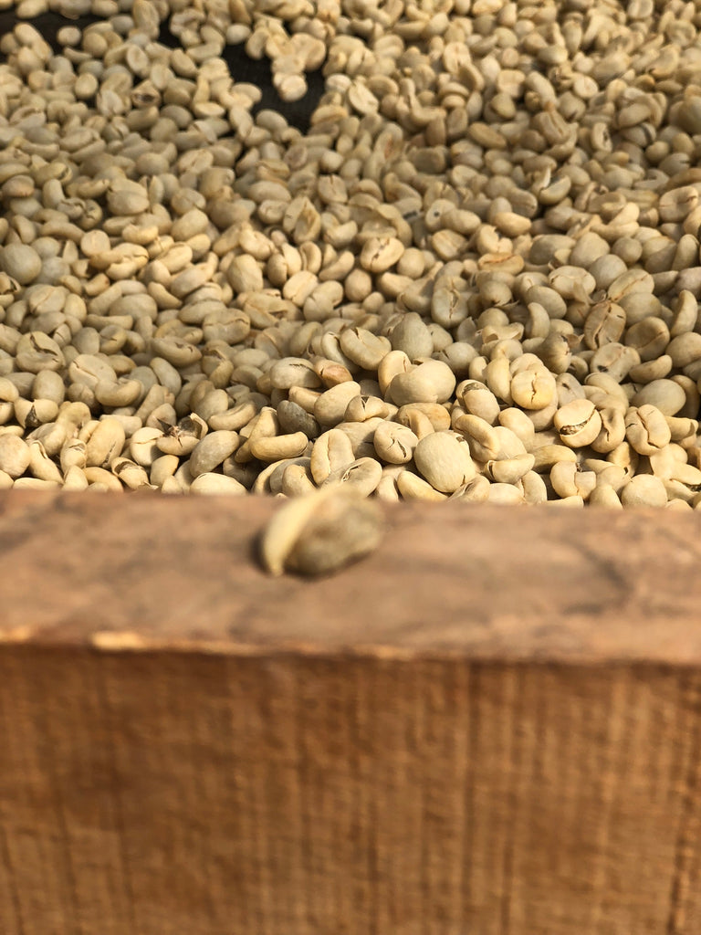 Washed coffee Guatemala