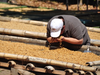 Specialty Coffee Farm Santa Cristina Direct Trade