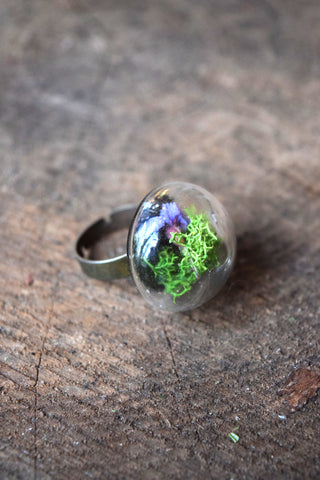 Black Tortoise Terrarium Ring