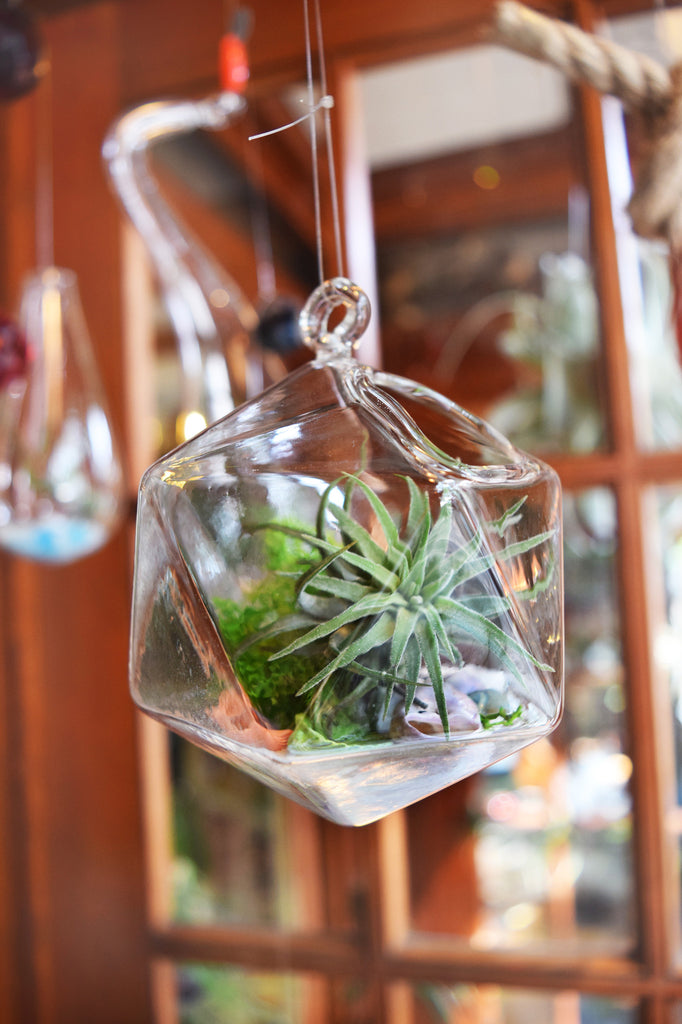 Small Diamond Terrarium