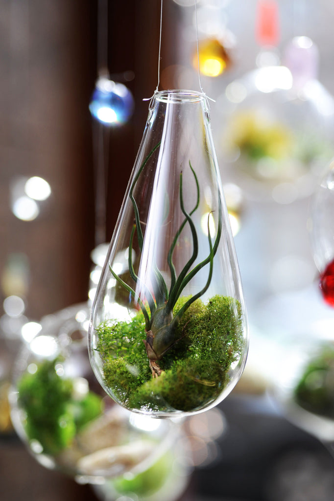Small Teardrop Hanging Terrarium