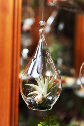 Tear Drop Hanging Terrarium