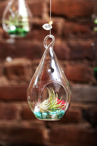Tear Drop Hanging Terrarium with Flat Bottom
