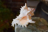 Spiked Conch Shell Candle