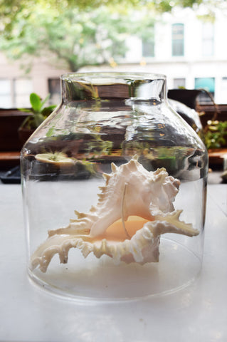 Spiked Conch Shell Candle with Hurricane Glass