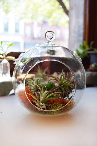 Large Spherical Hanging Terrarium with Flat Bottom