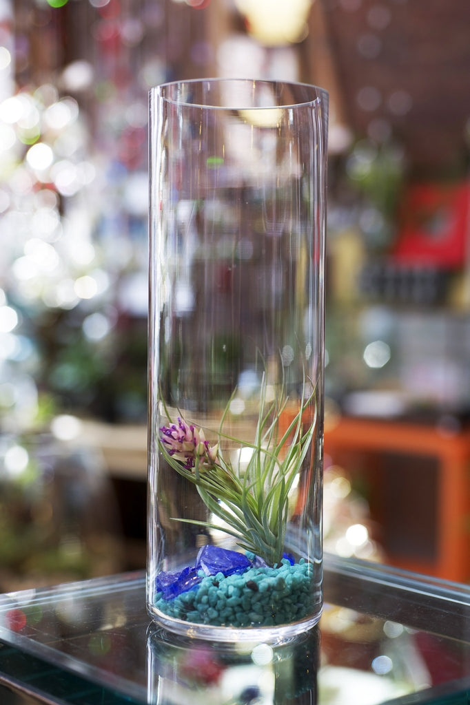 Tall Table Top Terrarium with Sea Glass