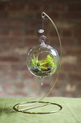 Spherical Hanging Terrarium