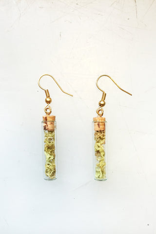 Glass Terrarium Tube Earrings