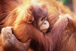 Why We Will Never Use Palm Oil