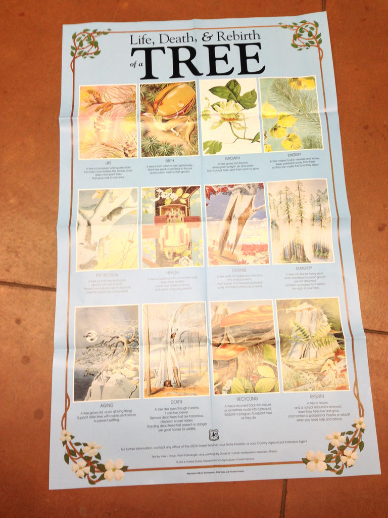 Life, Death, and Rebirth of a Tree Poster