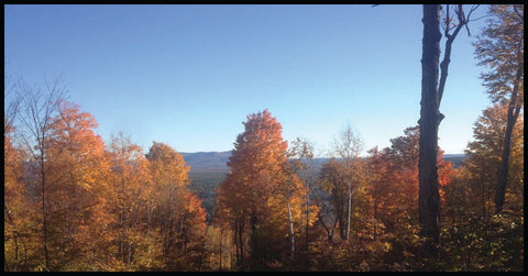 Our sugar bush in its fall colors.