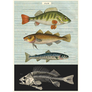 Fish Chart Decorative Paper