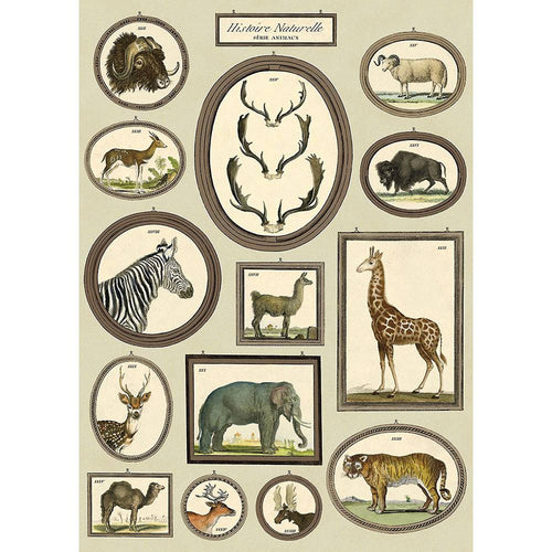 Natural History Animals Decorative Paper