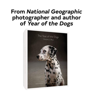 The Year of the Dog Notecards