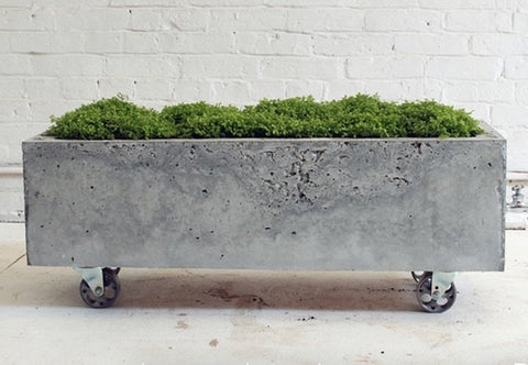 5 Stylish Concrete Planters to Wow Your Visitors