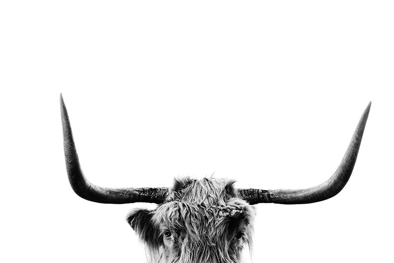 Highlander Cow Print 3 - Mind over Manor