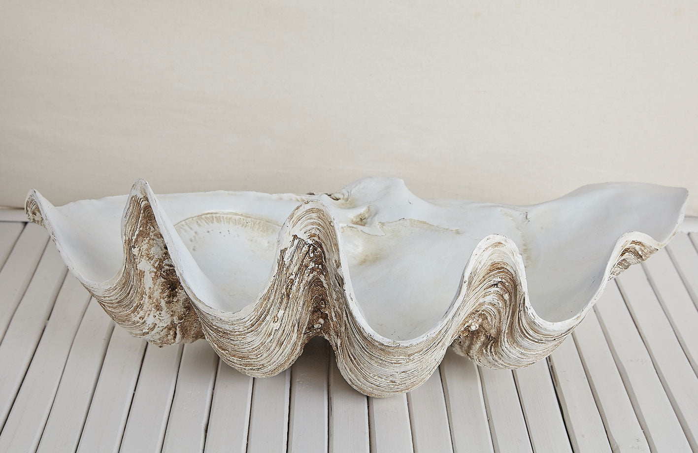 Vintage Clam Shell