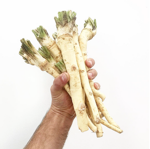Horseradish  ... FIRE TONIC ® ingredient #6