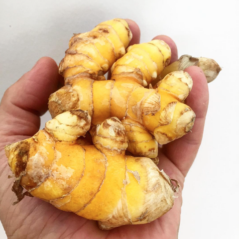 Turmeric  ... FIRE TONIC ® ingredient #3