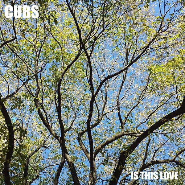 Is This Love - Single