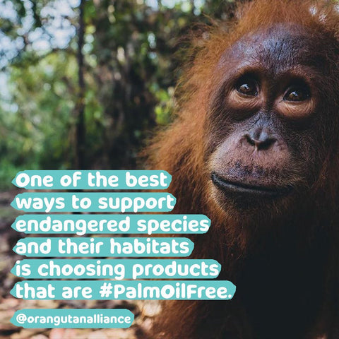 Choose palm oil free toothpaste to save our orangutans