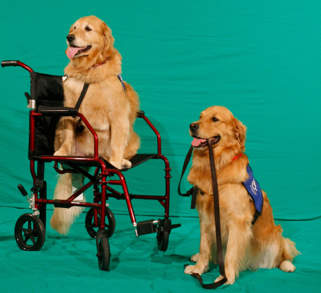 Pets on Wheels Dogs
