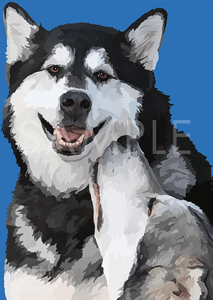 Alaskan Malamutes on Blue Note Card (Maya and Sweet Pete)