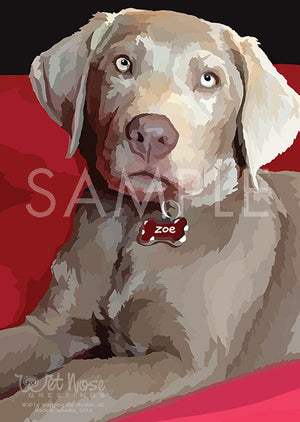 Labrador Retriever Silver