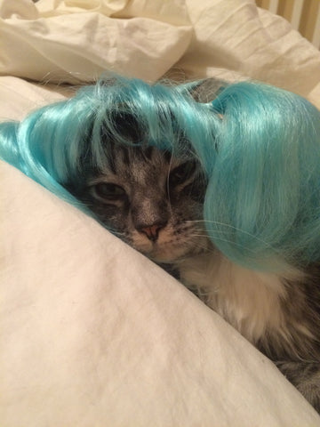 Sleepy cat in blue wig