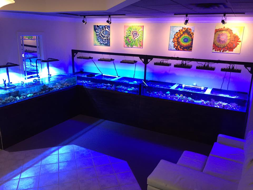House of Corals: Best selection of saltwater corals