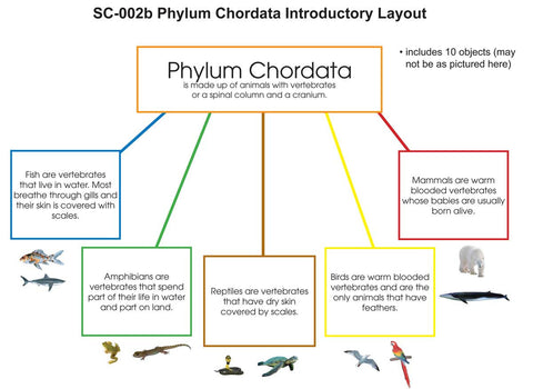 Phylum Chordata Layout - M&M Montessori Materials  - 1