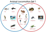 Animal Locomotion - M&M Montessori Materials  - 1